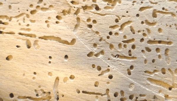 نصائح مكافحة حشرات الخشب