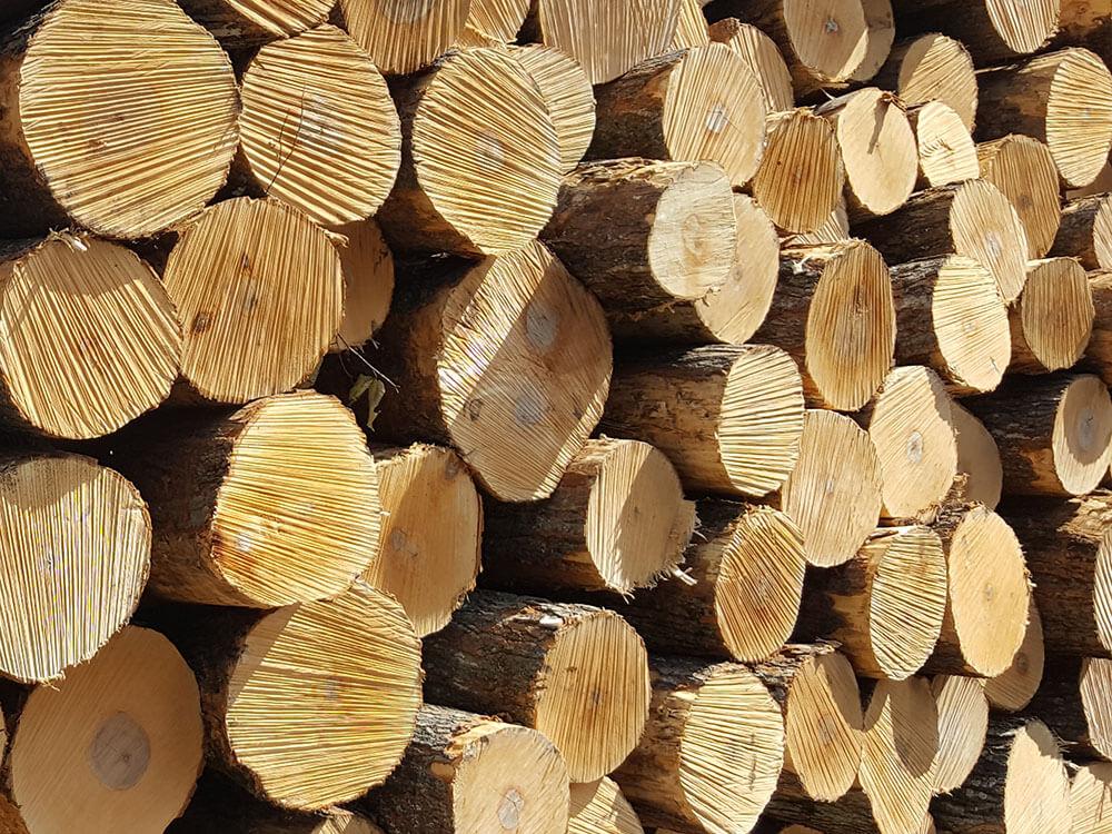 انواع الاخشاب الطبيعية