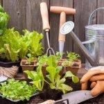 كيف يمكن الاعتناء بالنباتات المنزلية